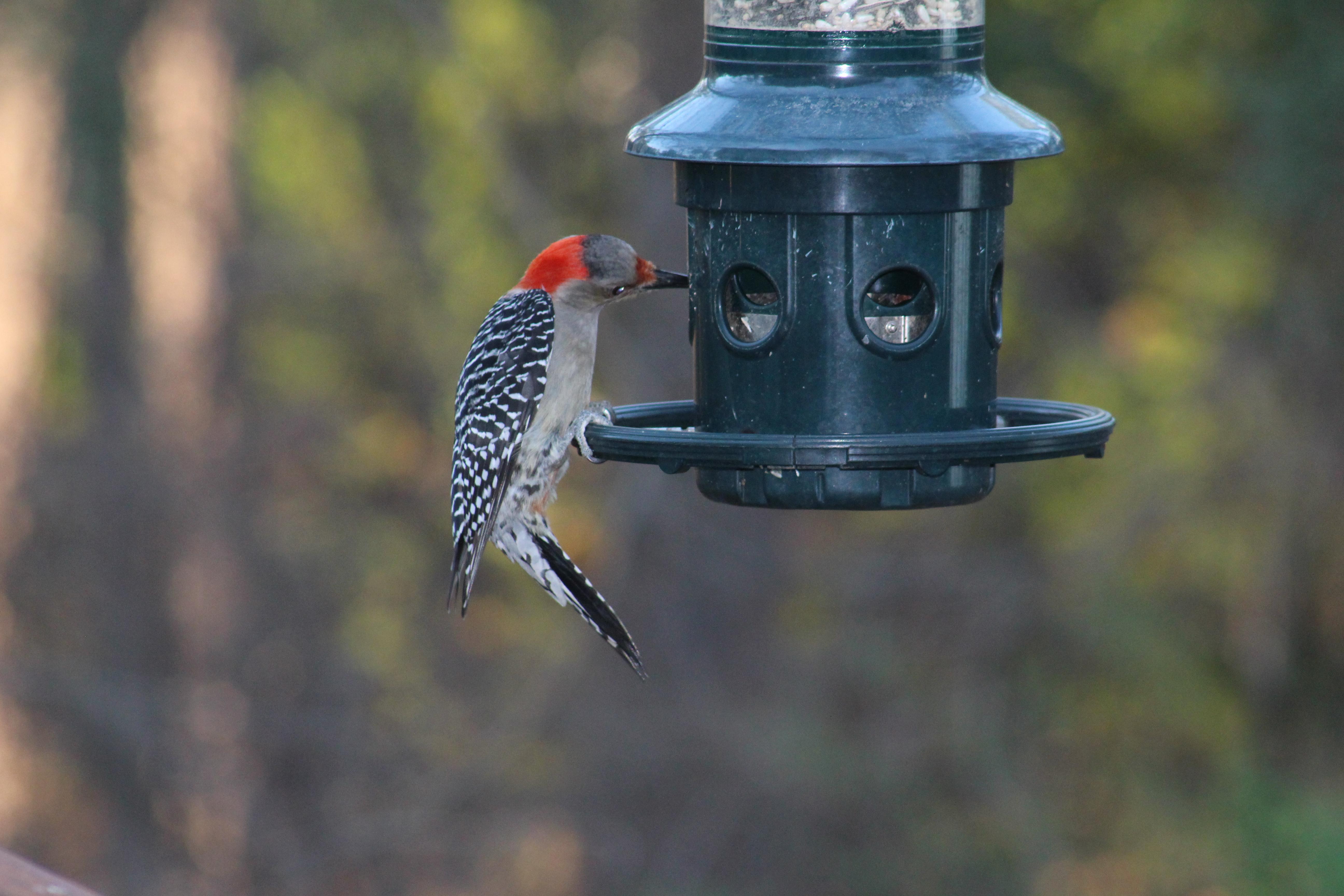 great back yard bird watch savannah river realty